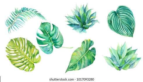 Set f watercolor tropical leaves