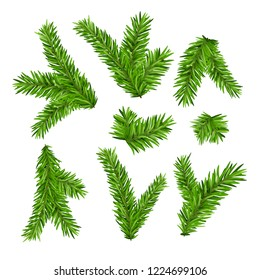 Set of fir branches. Christmas tree or pine branch evergreen illustration. Fir isolated holiday decoration.