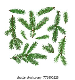 Set of fir tree branches isolated on white background. Christmas, new year symbol. Art raster illustration