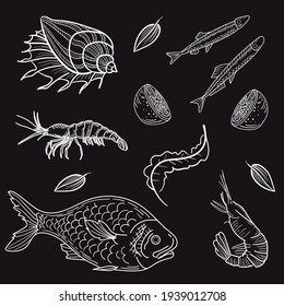 Set fish, shrimp, shell, trout, lemon. Hand-drawn sketch in a graphic style on the chalckboard. Vintage engraving illustration. Isolated on black background.