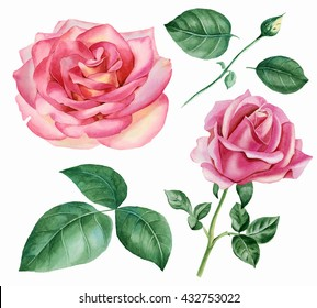 Set of floral elements. Blooming roses, buds flowers, leaves, twigs. Watercolor illustration on white background.