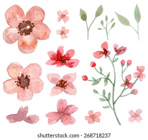 Set of flower and leaf traditional drawing and painting by watercolor on white background