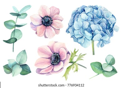 set flowers,  anemones, hydrangea, eucalyptus. Watercolor botanical illustration, hand drawing
