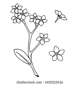 A set of  flowers forget-me-nots.  Isolated elements on white background for your design. raster copy