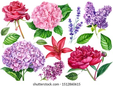 Set of flowers. Hydrangea, peony, lavender, rose, lily, lilac, green leaves on an isolated white background, watercolor botanical painting, hand drawing, floral design