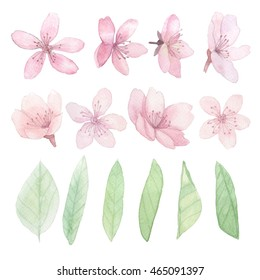 Set of flowers and leaves traditional drawing and painting by water-colour on white background