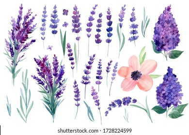 set of set of flowers, lilac, anemone, lavender on a white background, watercolor hand drawing, botanical painting, purple flowers