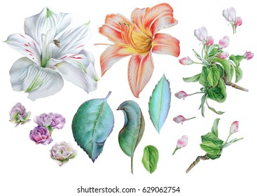 Set with flowers. Lily. Alstroemeria. Blossom. Leaves. Watercolor illustration. Hand drawn.