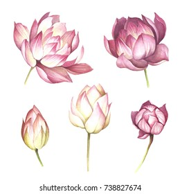 Lotus images stock photos vectors shutterstock set with flowers lotus hand draw watercolor illustration mightylinksfo