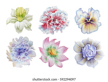 Set with flowers. Pansies. Narcissus. Marigold. Peony. Lotus. Watercolor illustration. Hand drawn.