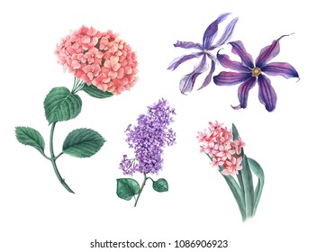 Set of flowers: pink hydrangea, violet lilac, pink hyacinth, violet clematis with green leaves watercolor illustration isolated on a white background