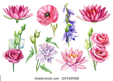 set flowers, ranunculus, lotus, rose, blue bell, pink eustoma, watercolor illustration on isolated white ackground, hand drawing