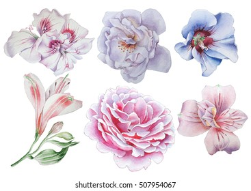 Set with flowers. Rose. Alstroemeria. Hibiscus. Watercolor illustration. Hand drawn.