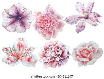 Set with flowers. Rose. Alstroemeria. Pansies. Peony. Clematis. Watercolor illustration. Hand drawn.