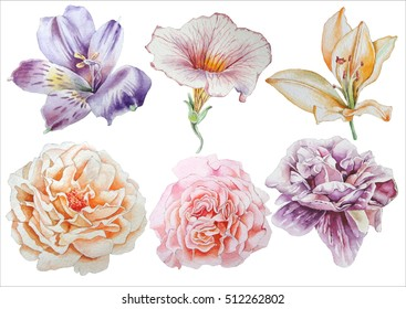 Set with flowers. Rose. Alstroemeria. Pansies. Peony. Lilia. Watercolor illustration. Hand drawn.