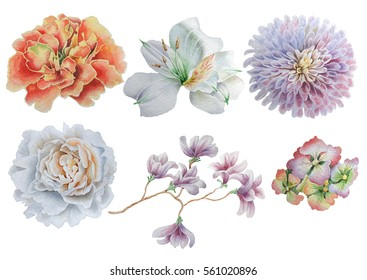 Set with flowers. Rose. Peony. Alstroemeria. Marigold. Watercolor illustration. Hand drawn.
