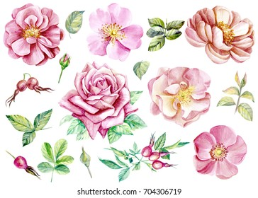Set of flowers, roses and dog rose, watercolor hand drawing, vintage style