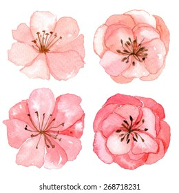Set of flowers traditional drawing and painting by watercolor on white background
