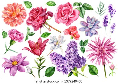 set of flowersroses, lilies, carnations, lavender, succulent, dahlia, quince  on an isolated white background, watercolor illustration, botanical painting, hand drawing
