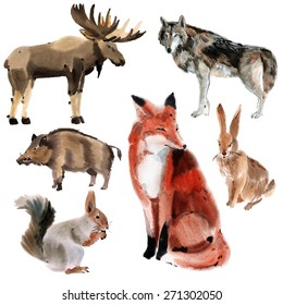 Set of forest animals. Watercolor illustration in white background.