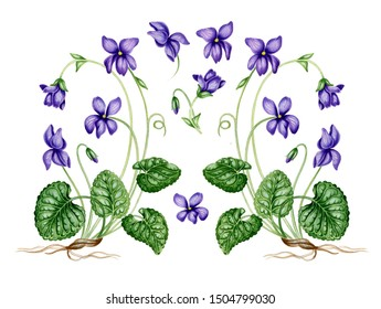 Set of forest violets. Hand drawn realistic botanical illustration. Watercolor of wild flowers. For design web-pages, postcards, textile, wallpaper and other.  Isolated on white background.