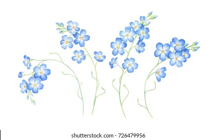 Set of forget me not flowers isolated on white background. Hand drawn watercolor illustration.