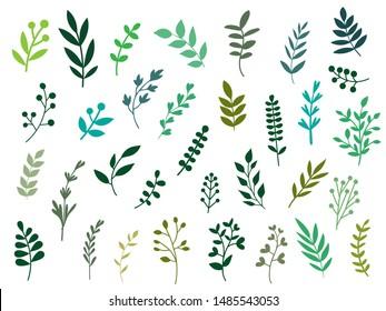 Set of Green Botanical Leaves Branch Elements