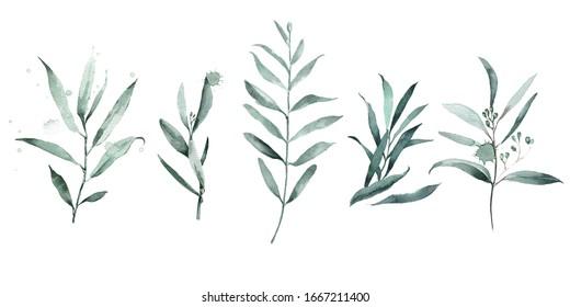 Set of green branch eucalyptus watercolor drops. Abstract watercolor for wedding design invitations.