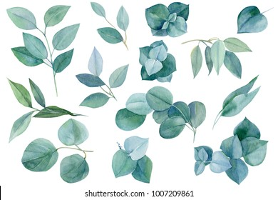 set of green elements, branches and leaves of eucalyptus, watercolor painting, hand drawing,