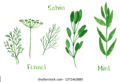 Set of green herbs, dill, fennel, sage, salvia, mint, hand drawn watercolor illustration isolated on white