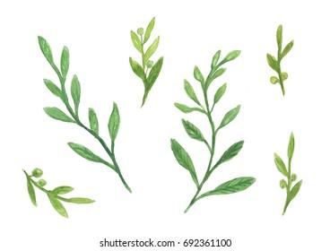 set of green leaf watercolor illustration