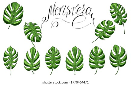 set of green monstera leaves and lettering for textile, print, raster copy