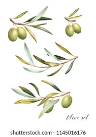 Set of green  olive branches. Mediterranean cuisine Isolated watercolor illustration.