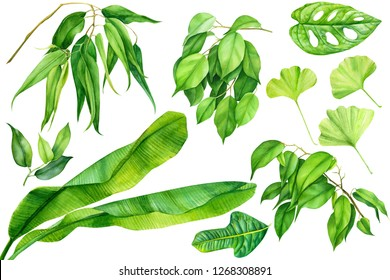 set of green summer leaves, banana palm branches, tropical plants on an isolated white background, watercolor illustration, hand drawing