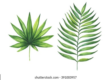 Set of green tropical palm leaves. Watercolor illustration of exotic plant. Isolated on white background.