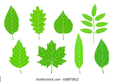 set of hand drawn green leaves on white background