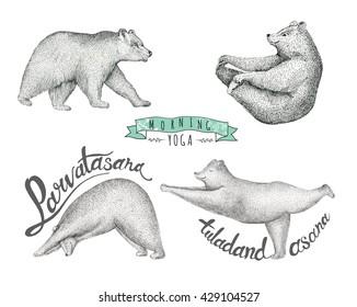 Set of Hand drawn illustration. fun a bear isolated on vintage background. Print posture, morning practice pranayama asana pose yoga. Spirit graphic hipster character. Workout, sport