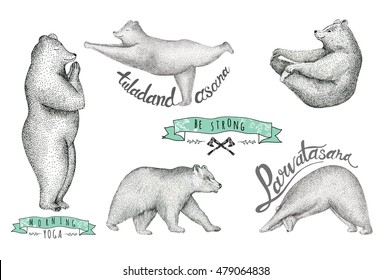 Set of Hand drawn  illustration of fun a bear isolated on vintage background. Print posture of morning practice pranayama asana pose yoga. Spirit graphic  hipster character. Workout, sport