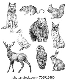 Set of hand drawn ink animals.Wolf, harvest mouse, squirrel, bear, goose,deer, owl, hare, lynx. Line art. Element for design. Isolated on white