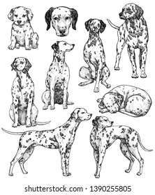 Set of hand drawn ink dogs sketches. Dalmatian, watchdog. Vintage ink animals illustration. Isolated on white