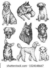 Set of hand drawn ink dogs sketches. Portraits of labrador, retriever, corgi, poodle, mastiff, husky, shepherd, dachshund, pug, dalmatian. Vintage ink animals illustration. Isolated on white