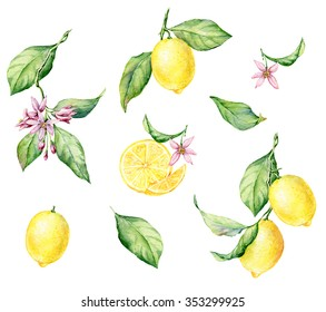 Set of hand drawn watercolor botanical illustration of fresh yellow Lemons. Element for design of invitations, movie posters, fabrics and other objects. Isolated on white.