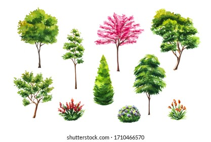 Set of hand drawn watercolor trees illustrations, bushes and flowers isolated on white. Collection of various hand painted plants