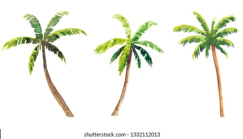 Set of hand painted watercolor palmtrees isolated on white background