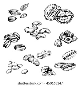 set of hand sketched nuts on white background: hazelnut, almonds, peanuts, walnut, cashew, brazilian nut, chestnut, pistachios