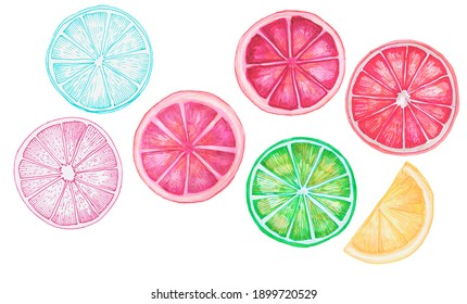 Set of hand-drawn fruit pieces. Clipart design stylized illustration for natural products, patterns, packages, flyers. detailed line drawing made with marker. color picture lemon, orange, grapefruit