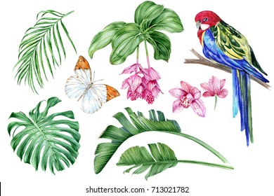 Set of hand-drawn watercolor elements. Parrot Rosella, medinilla, orchids, butterflies, tropical leaves.