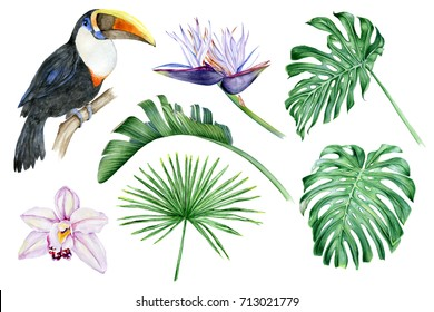 Set of hand-drawn watercolor elements. Toucan, orchids, strelitzia, monstera, palm trees, tropical leaves.