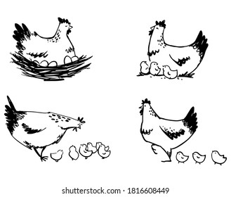 Set of hens with chicks and hen sitting on eggs line art.