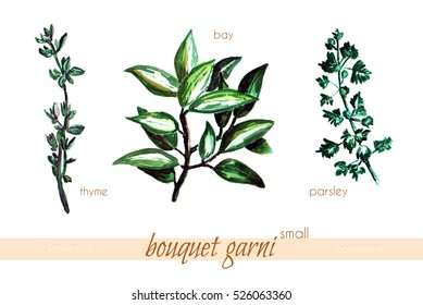 Set of herbs. Bouquet garni small. Thyme, bay, parsley elements